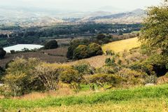Landscape with open field full of yellow and green foliage. Panoramic view to grass and trees on the hill on sunny day royalty free stock photo