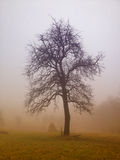 Nature landscape, tree in morning fog Stock Image