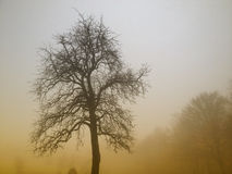 Nature landscape, tree in morning fog Royalty Free Stock Photos