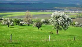 Nature landscape pasture Stock Image