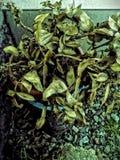 Tree. Nature landscape poland Stock Image