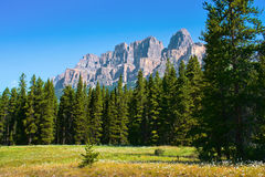 Nature landscape with Rocky Mountains in Canada. Beautiful nature landscape with Castle Mountain in the background in Jasper National Park, Alberta, Canada stock photos