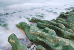 Nature landscape of seaweed coast. Stock Photo