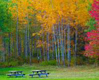 Nature landscape, Trees changing colors. During autumn in a forest park with benches, rural Pennsylvania Poconos Mountains Stock Images