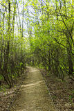 Nature landscape view of a pathway in a green forest on spring times with green leaves and trees Royalty Free Stock Photo