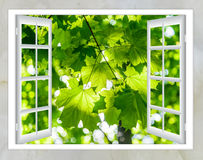 Nature landscape with view through window. Nature landscape with a view through a window with curtains royalty free stock photography
