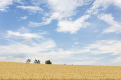 Nature landscape view of yellow soft golden grass field hill and Royalty Free Stock Photos