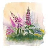 Nature landscape with wildflowers Royalty Free Stock Photo