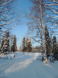 Nature landscape winter snowy fores and ski track Royalty Free Stock Images