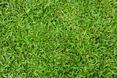 Nature landscapes green grass Stock Images