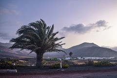 Nature of lanzarote royalty free stock images
