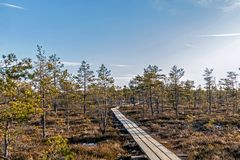 Nature of Latvia, Great Kemeri Swamp: Panoramic autumn landscape with wooden path over the swamp. Fall nature background. Wooden footpath on the bog with autumn royalty free stock images