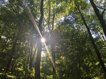 Nature& x27 ; le vert de s d'abord est or photo stock