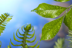 Nature Leaf Background Royalty Free Stock Images