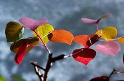 Nature, Leaf, Flora, Flower royalty free stock images