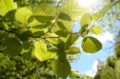 Nature  leaf Stock Photos