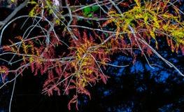 Nature, Leaf, Tree, Plant stock photo