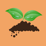 Nature leaf Royalty Free Stock Image