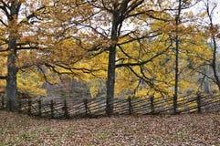 Nature, Leaf, Woodland, Autumn royalty free stock photos
