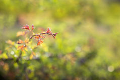 Nature leaves background Royalty Free Stock Photo