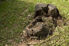 Nature letton avec le tronçon Photographie stock