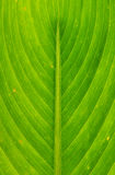 Nature lined pattern. Pattern on leaf have a  beautiful line Royalty Free Stock Photo