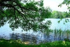 Nature of Lithuania: Galves lake near Trakai Royalty Free Stock Photo