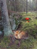 Nature. Little fox is sleeping in the forest Royalty Free Stock Image