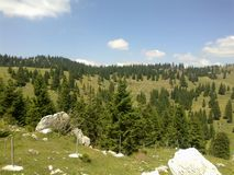 Nature in Logarska Dolina Royalty Free Stock Photo