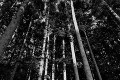 Nature. Long narrow stems ... up in the sky Stock Images