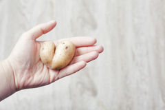 From nature with love. Potato in shape of heart. On the palm Stock Photos