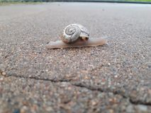 Snail in street stock photography
