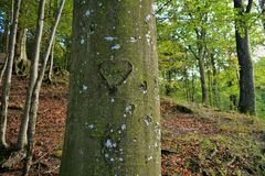 Nature. Love-trees is a rare sight Stock Photography