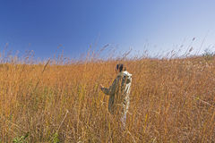 Nature Lover in the Tall Prairie Grass Stock Photography