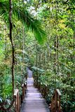 Nature Trail Boardwalk, Steps and Tree Top Walk stock image