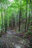 Nature at Low Tatras, Slovakia Stock Photos