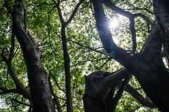 Nature lumineuse pendant le jour avec le soleil photographie stock