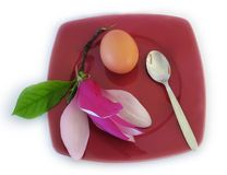Nature for lunch. Magnolia flower on a plate with tea spoon and egg Stock Image