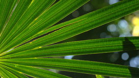 Nature lush green plant leaf foliage in forest sunlight stock video footage