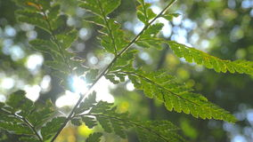 Nature lush green plant leaf foliage in forest sunlight stock video
