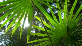 Nature lush green plant leaf foliage in forest sunlight stock footage
