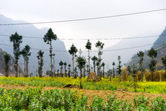 Nature majestic mountains landscape in Ha Giang, Vietnam Stock Photo