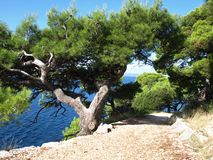 Nature of Makarska Stock Photos