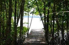 Mangroves and Aquatic nurseries. royalty free stock image