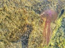 Nature. Marine animals Stock Image