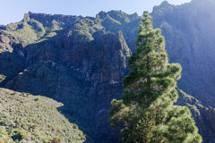 Nature in Masca Village, Tenerife Royalty Free Stock Photo