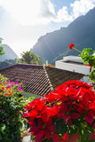 Nature in Masca Village, Tenerife Stock Photography