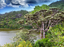 Nature of Mauritius. Lake and tropical trees in a sunny day Stock Image