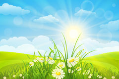 Nature meadow background Royalty Free Stock Photos
