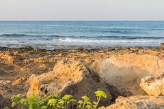 Nature on the Mediterranean coast. In Ayia NAPA in Cyprus Stock Photos